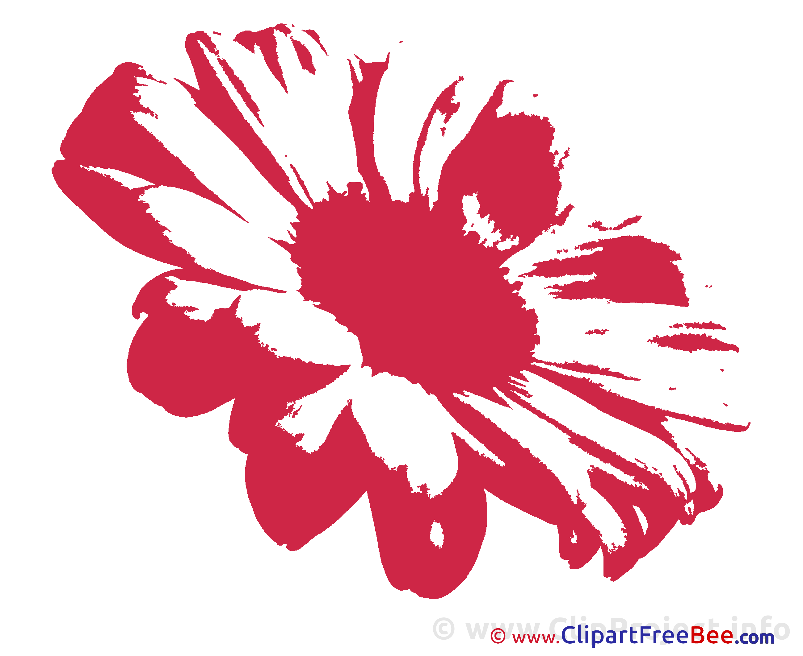 Chamomile Flower Clip Art download for free