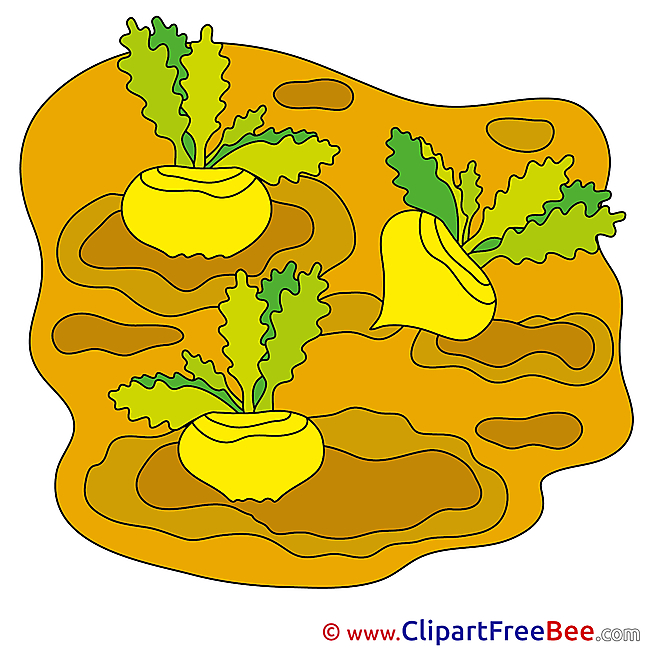 Turnips Pics free Illustration