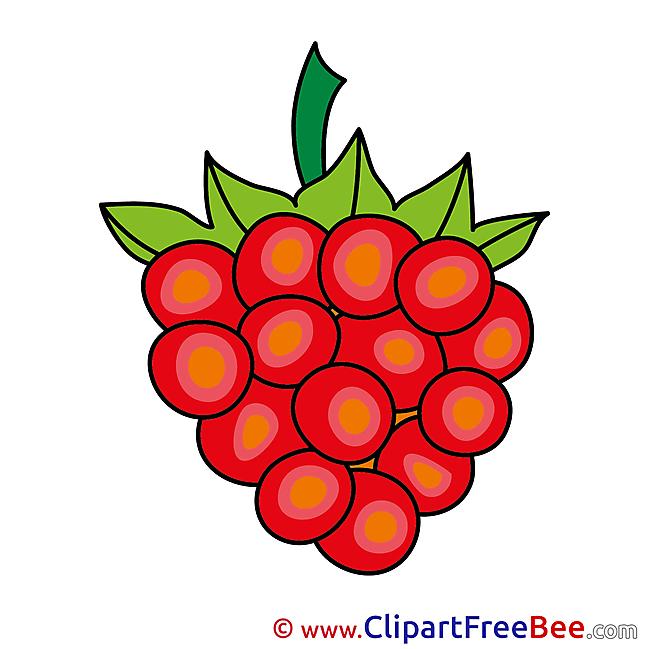 Berry Grapes Pics download Illustration