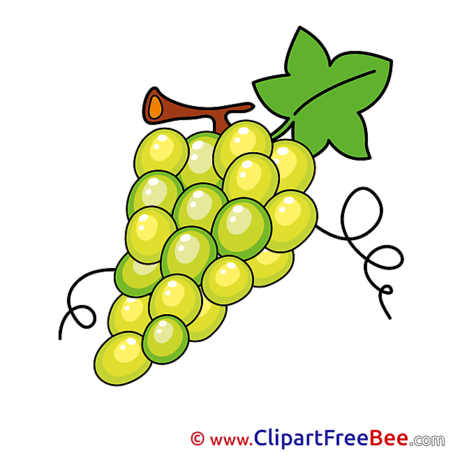 Bunch Grapes free printable Cliparts and Images