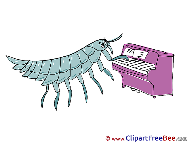 Bug plays Piano free Cliparts Kindergarten