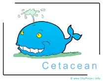 Cetacean Clip Art Image free - Animals Clip Art free