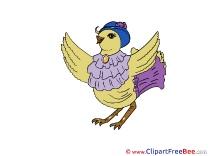 Hen Pics free Illustration