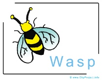 Wasp Clip Art Image free