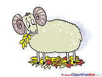 Sheep Leaves free Illustration Autumn