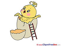 Egg Chicken Clipart Birthday Illustrations