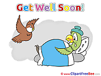 Bird Parrot free Cliparts Get Well Soon