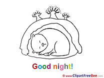 Den Bear free Illustration Good Night