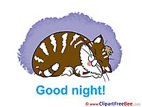 Image Cat Pics Good Night Illustration