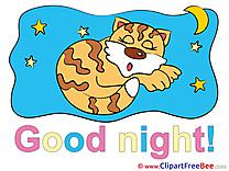 Tiger Stars Moon Pics Good Night free Image