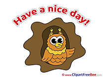 Owl Pics Have a Nice Day free Image
