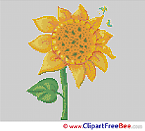 Sunflower Cross Stitches free