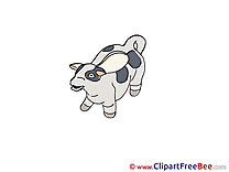 Cow printable Images for download