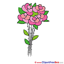 Roses Flowers Pics download Illustration