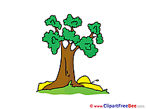 Tree Nature Pics free Illustration