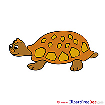 Turtle Images download free Cliparts
