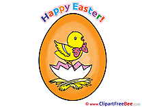 Chicken Easter Illustrations for free