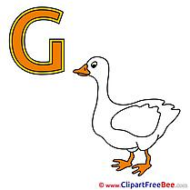 G Gans Alphabet free Images download