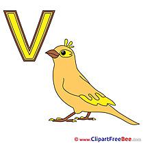 V Vogel Clipart Alphabet Illustrations