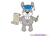 Bunny Diploma Clipart Graduation free Images