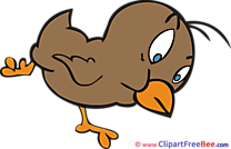 Beak Chick Bird free Cliparts for download