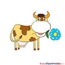 Cow Flower Pics free Illustration
