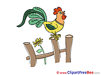 Fence Cock Clipart free Image download