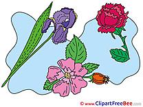 Garden Flowers Clipart free Illustrations
