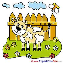 Heifer Meadow Fence Pics download Illustration