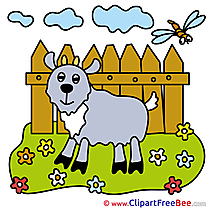 Meadow Flowers Goat Pics free Illustration
