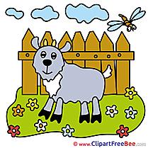Meadow Flowers Goat Pics free Illustration