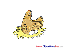 Nesting Chicken free printable Cliparts and Images