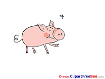 Pig Fly Clipart free Image download