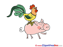 Piggy Chicken Clipart free Illustrations