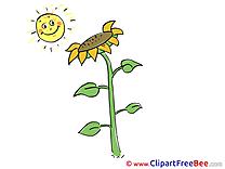 Sun Sunflower download Clip Art for free