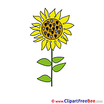 Sunflower free Illustration download