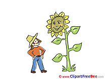 Sunflower printable Images for download