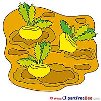 Turnips Pics free Illustration