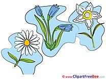 Beautiful free Illustration Flowers