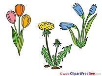 Bloom Flowers download Illustration