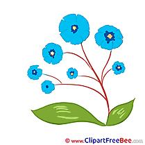 Blue Flowers Pics Illustration