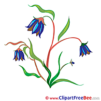 Bluebell Flowers Illustrations for free