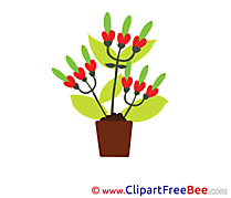 Bouquet Flowers Illustrations for free