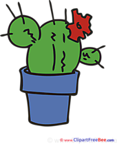 Cactus Pics Flowers free Image