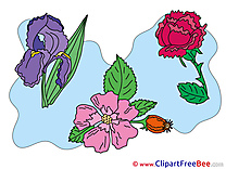 Clipart beautiful Flowers Illustrations