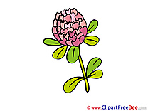 Clover printable Illustrations Flowers