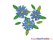 Cornflower download Flowers Illustrations