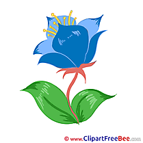 Cornflower Flowers Illustrations for free
