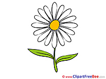 Daisy Clipart Flowers free Images