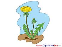 Dandelion Clip Art download Flowers
